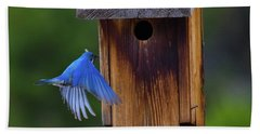Mountain Bluebird Male Beach Sheet by John Roberts