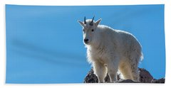 Beach Towel featuring the photograph Mountain Goat 4 by Gary Lengyel