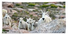 Beach Towel featuring the photograph Mountain Goat Family Panorama by Scott Mahon