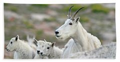 Beach Towel featuring the photograph Mountain Goat Family by Scott Mahon