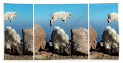 Mountain Goat Leap-frog Triptych Beach Towel