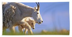 Beach Towel featuring the photograph Mountain Goat Light by Scott Mahon