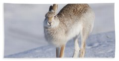 Mountain Hare In The Snow - Lepus Timidus  #2 Beach Sheet