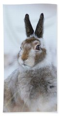 Beach Towel featuring the photograph Mountain Hare - Scotland by Karen Van Der Zijden