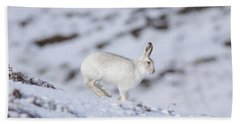 Mountain Hare - Scottish Highlands  #12 Beach Towel