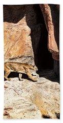 Mountain Lion Beach Sheet by Lawrence Burry