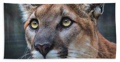 Mountain Lion Portrait  Beach Sheet