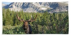 Beach Towel featuring the photograph Mountain Moose by Chris Scroggins