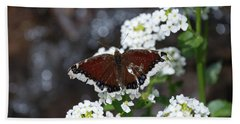 Beach Towel featuring the photograph Mourning Cloak by Jason Coward