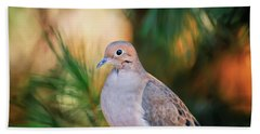 Beach Towel featuring the photograph Mourning Dove Bathed In Autumn Light by Kerri Farley of New River Nature