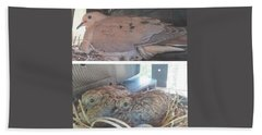 Mourning Dove Family Beach Towel