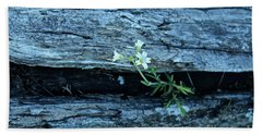 Beach Towel featuring the photograph Mouse Eared Chickweed by Ann E Robson