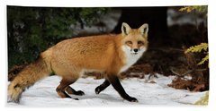 Beach Towel featuring the photograph Mr Fox by Mircea Costina Photography