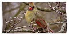 Beach Towel featuring the photograph Mrs Cardinal by Douglas Stucky