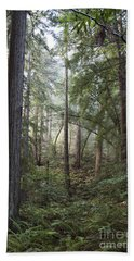 Beach Towel featuring the photograph Muir Woods Tranquility by Sandra Bronstein