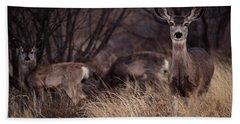 Mule Deer Mama And Twins Beach Towel by Karen Slagle