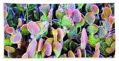 Multi-color Artistic Beaver Tail Cactus Beach Sheet by Linda Phelps