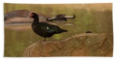Muscovy Duck Beach Towel