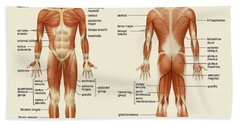 Muscular System Beach Sheet by Gina Dsgn