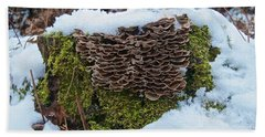 Mushrooms And Moss Beach Sheet by Michael Peychich