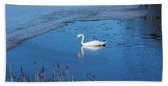 Mute Swan Swimming Beach Towel