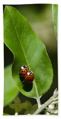 Nature - Love Bugs Beach Towel by Christina Rollo
