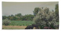 Nebraska Farm Life - Black Cows Grazing Beach Towel