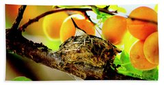 Nesting Hummingbird In Colorado Beach Towel