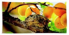 Nesting Hummingbird In Colorado Beach Sheet