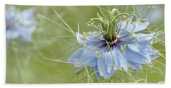 Beach Sheet featuring the photograph Nigella Damascena by Cindy Garber Iverson