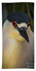 Night Heron Portrait Beach Sheet by Mitch Shindelbower