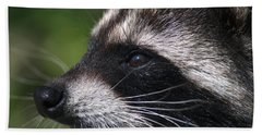 North American Raccoon Profile Beach Towel by Sharon Talson