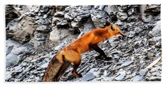 Beach Towel featuring the photograph North American Red Fox by Daniel Hebard