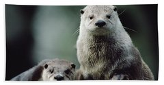 Northern River Otter Photographs Beach Towels