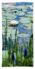 North American White Water Lily Beach Towel