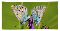 Northern Blue's Mating Beach Towel