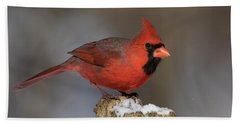 Beach Towel featuring the photograph Northern Cardinal In Winter by Mircea Costina Photography