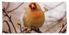 Beach Towel featuring the photograph Northern Female Cardinal Pose by Terry DeLuco