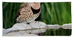 Northern Flicker Drinking Beach Towel