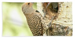 Northern Flicker Feeding Baby Beach Towel