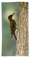 Northern Flicker Halo Beach Towel