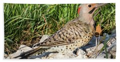 Beach Sheet featuring the photograph Northern Flicker In The Backyard by Ricky L Jones