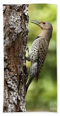 Northern Flicker On The Hunt Beach Sheet