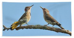 Northern Flickers Communicate Beach Sheet by Alan Lenk