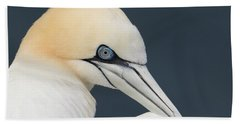 Northern Gannet At Troup Head - Scotland Beach Sheet