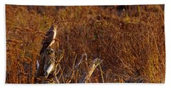 Beach Towel featuring the photograph Northern Harrier At Sunset by Sharon Talson