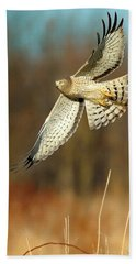 Northern Harrier Banking Beach Towel