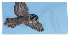 Beach Towel featuring the photograph Northern Hawk Owl Hunting by Mircea Costina Photography