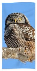 Northern Hawk-owl On Limb Beach Sheet