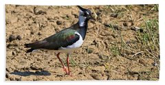 Northern Lapwing Beach Towel